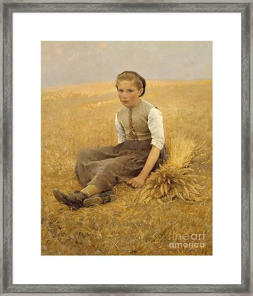 The Little Gleaner, 1884 Framed Print