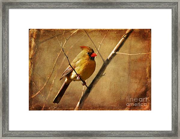 Framed Print featuring the photograph The Little Mrs. by Lois Bryan