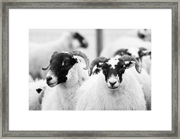 The Locals Framed Print