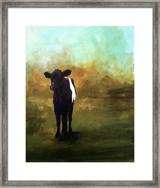 The Lone Beltie Framed Print by Cari Humphry