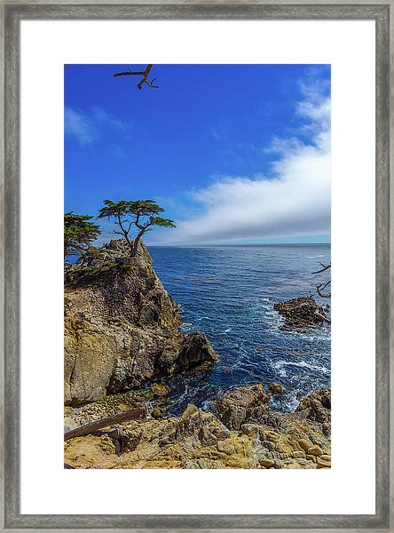 The Lone Cypress 17 Mile Drive Framed Print
