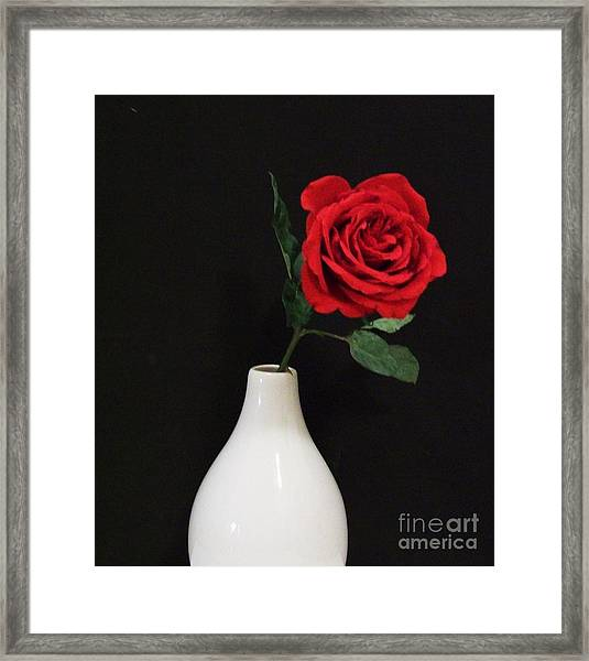 The Lonely Red Rose Framed Print by Marsha Heiken