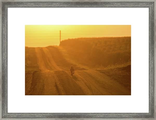 The Lost Puppy Framed Print