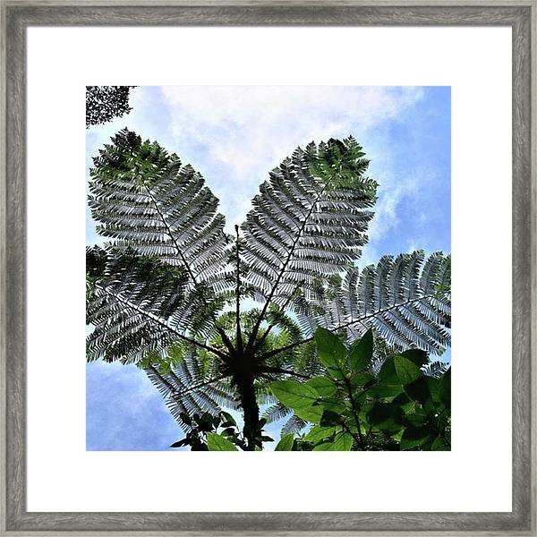 Large Queen Fern - Puerto Viejo, Costa Framed Print