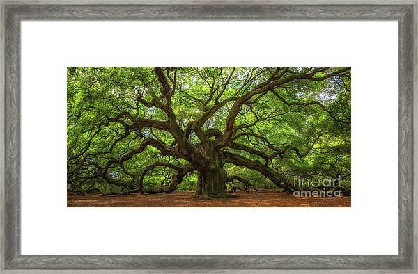 The Magical Angel Oak Tree Panorama  Framed Print
