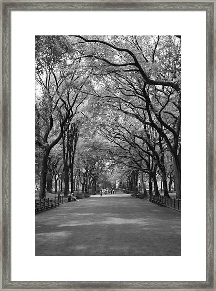 The Mall In Central Park And Poets Walk Framed Print