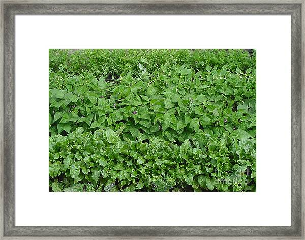The Market Garden Landscape Framed Print