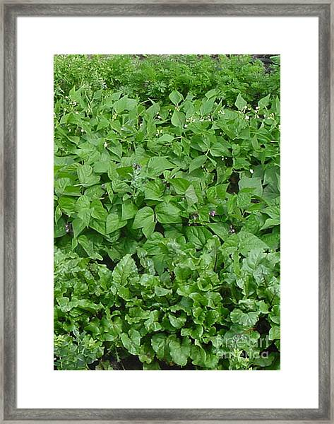 The Market Garden Portrait Framed Print