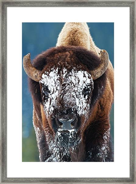 The Masked Bison Framed Print