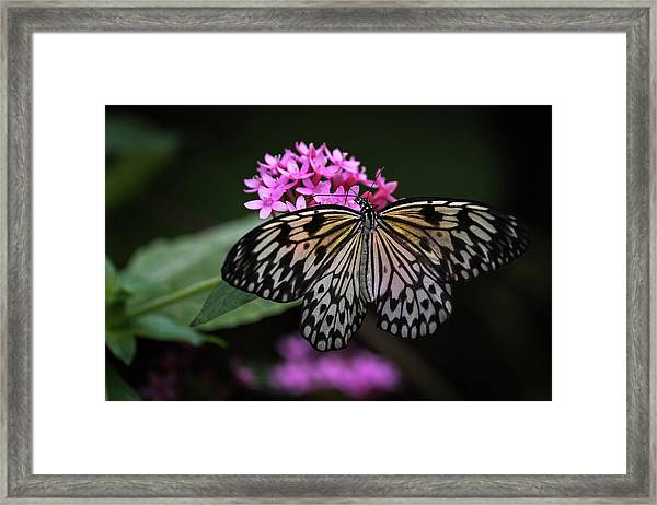 The Master Calls A Butterfly Framed Print
