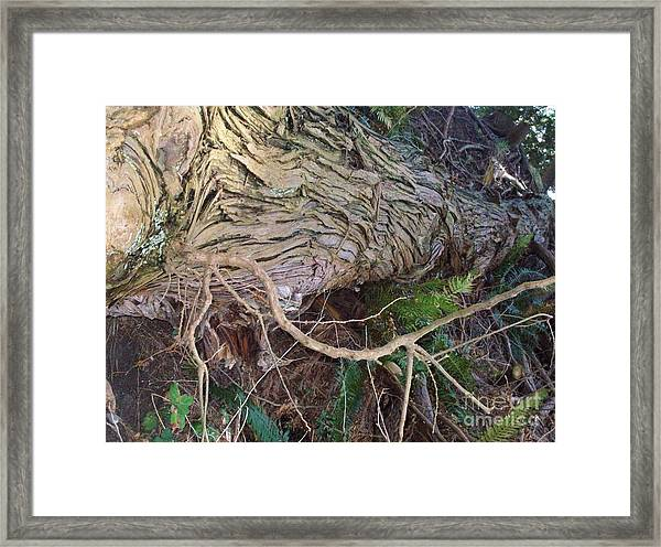 The Mighty Has Fallen Framed Print