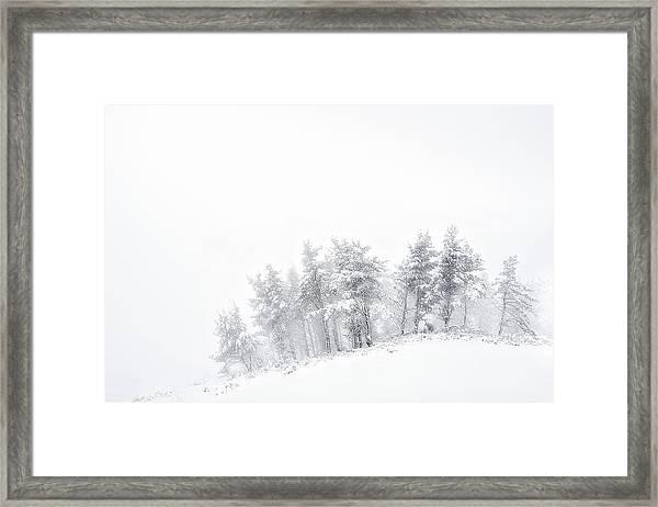 The Minimal Forest Framed Print