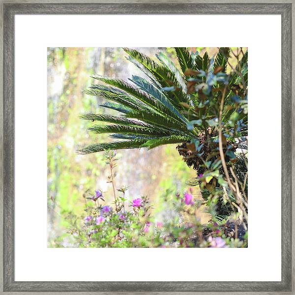 The Missing Tear Drop Framed Print