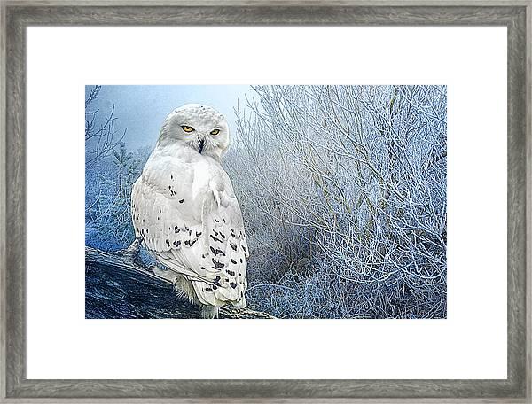 The Mystical Snowy Owl Framed Print