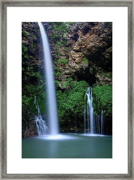 The Natural World Framed Print