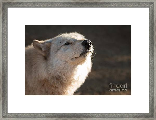 The Nose Knows Framed Print