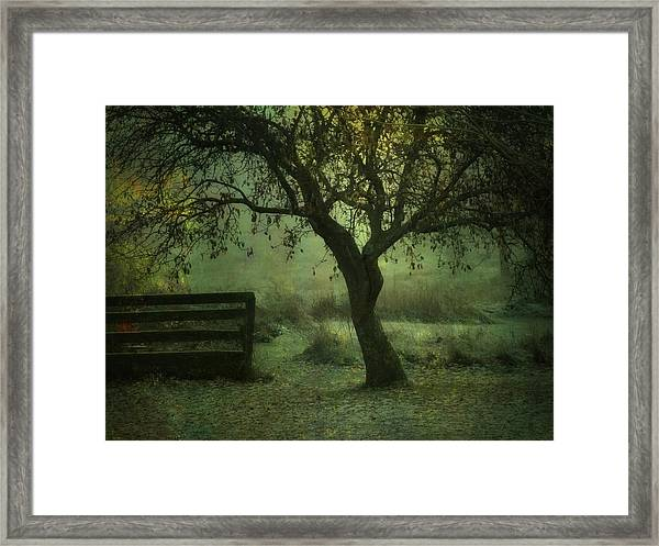 The Old Apple Tree Framed Print