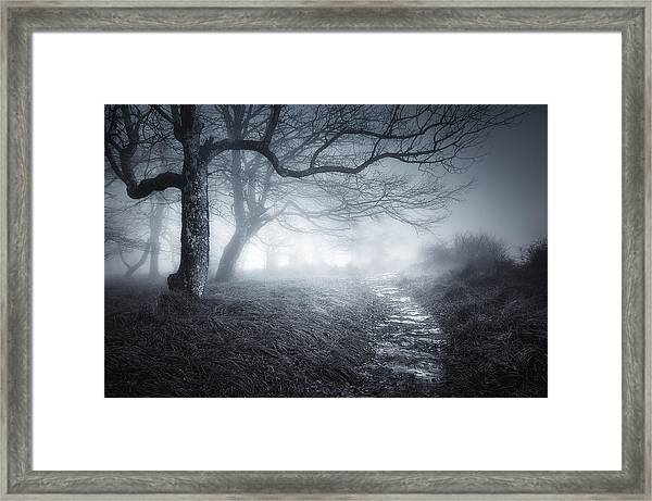 The Old Forest Framed Print