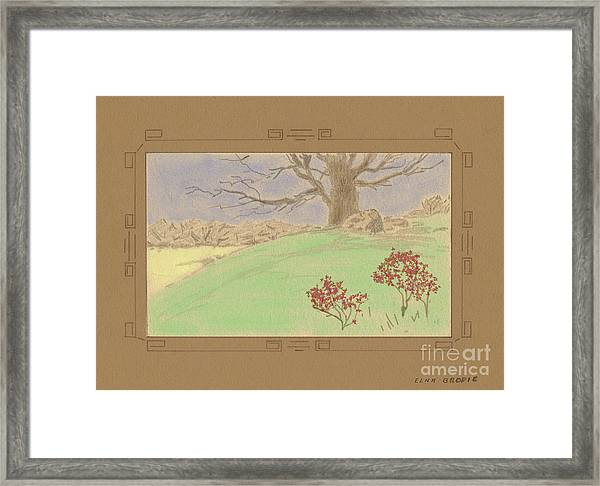 The Old Gully Tree Framed Print