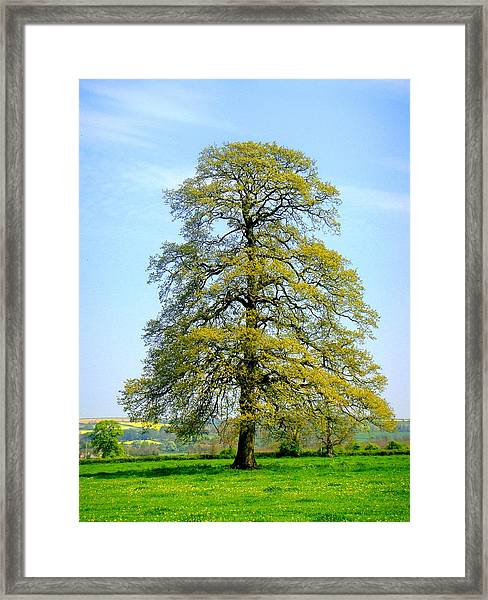The Other Tree Framed Print