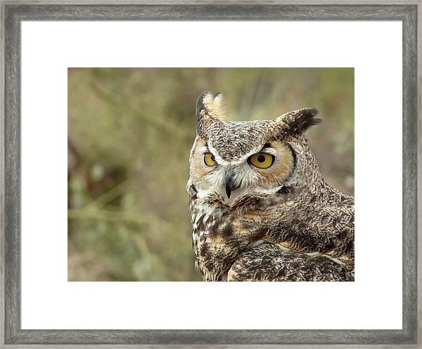 The Owl Framed Print