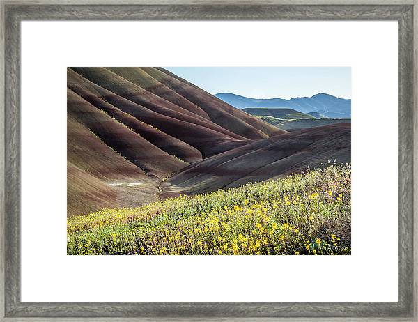 The Painted Hills In Bloom Framed Print