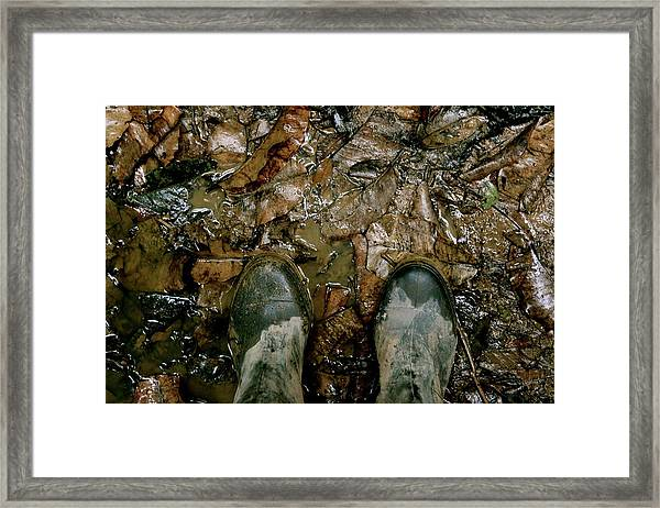 The Path Into The Amazon Framed Print