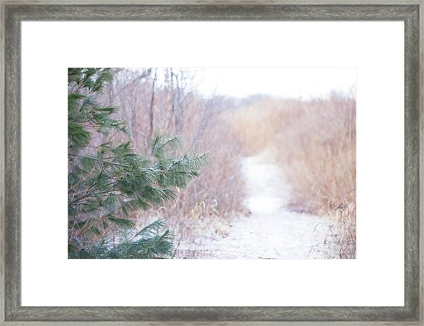 The Path Untraveled  Framed Print