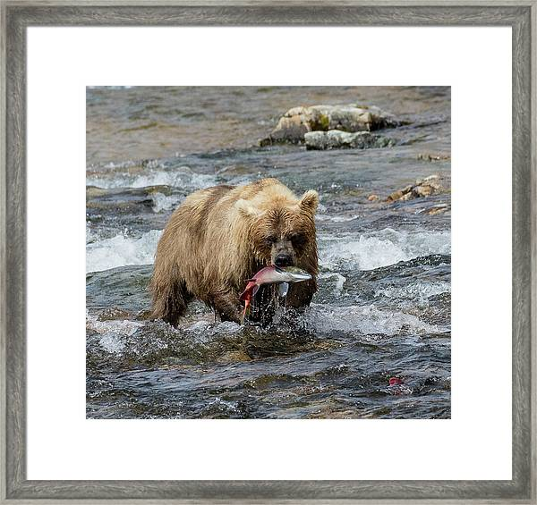 The Perfect Catch Framed Print