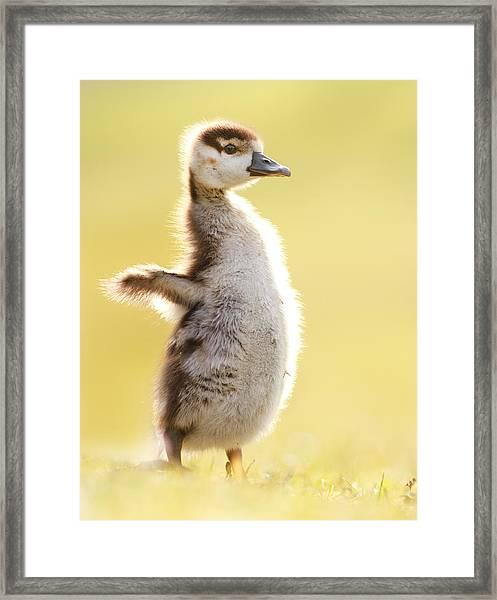 The Pinguin Simulator Framed Print