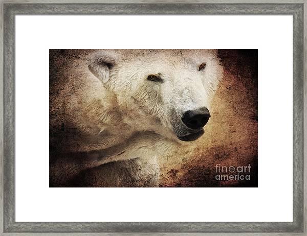 The Polar Bear Framed Print