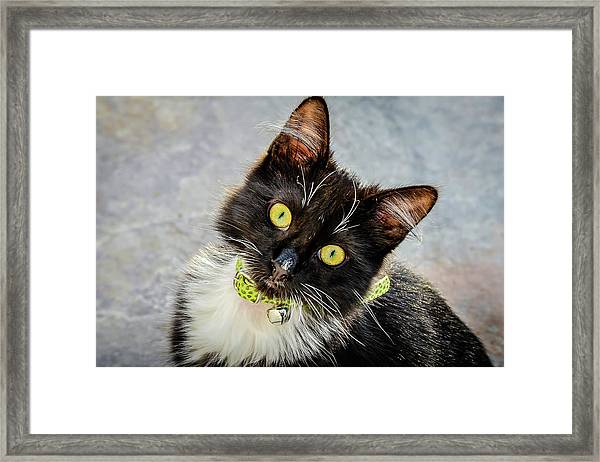 The Portrait Of A Cat Framed Print