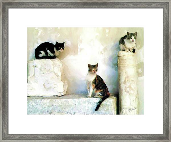 The Pose - Rdw250812 Framed Print