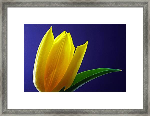 The Present Framed Print