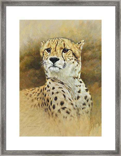 The Prince - Cheetah Framed Print