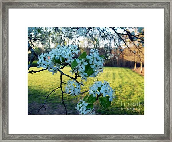 The Promise Of Spring 1c Framed Print