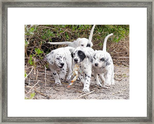 The Puppy's Prize Framed Print