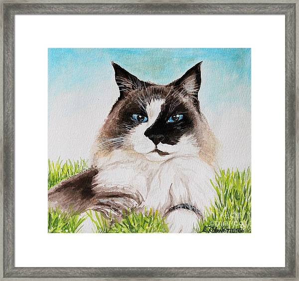 The Ragdoll Framed Print