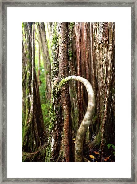 The Rainforest Framed Print