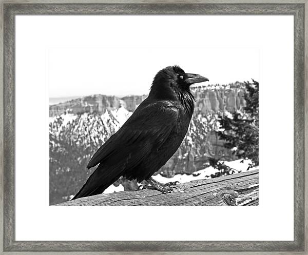 The Raven - Black And White Framed Print
