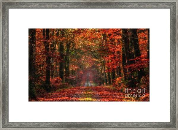 The Red Path 2 Framed Print