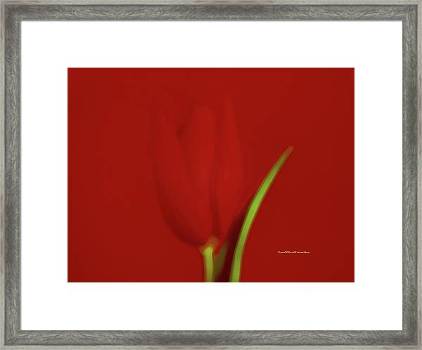 The Red Tulip Art Photograph 2 Framed Print