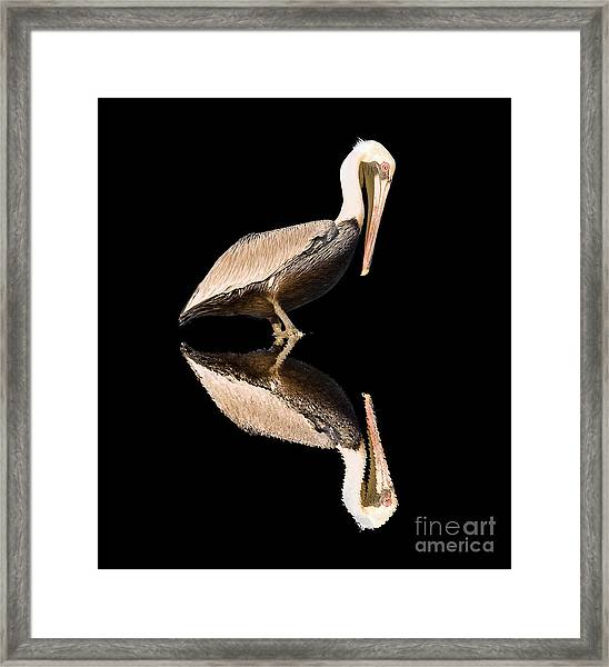 The Reflection Of A Pelican Framed Print