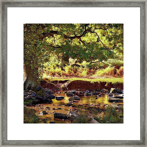 The River Lin , Bradgate Park Framed Print