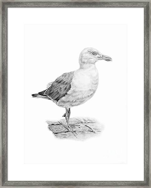 The Seagull Strut Framed Print