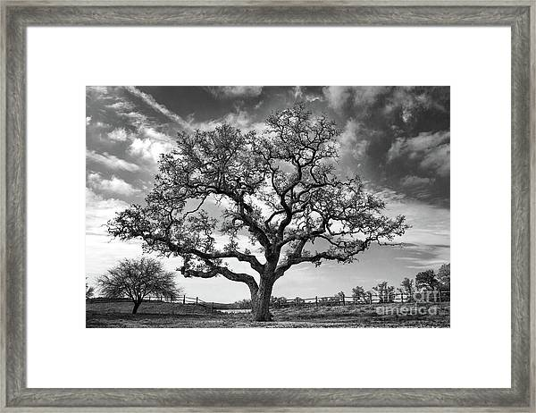 The Sentinel Bw Framed Print