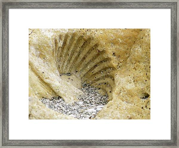The Shell Fossil Framed Print