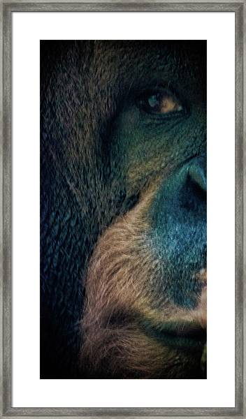 The Shy Orangutan Framed Print