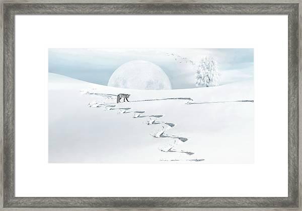 The Silver Fox Framed Print