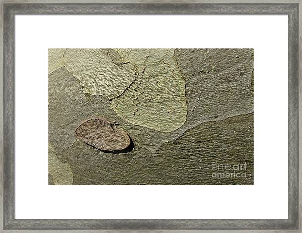 The Skin Of Tree Framed Print